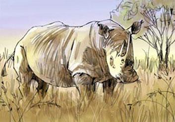 Nob Yamashita's Wildlife / Animals storyboard art