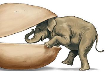Paul Binkley's Wildlife / Animals storyboard art