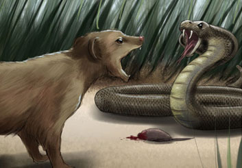 Jeremiah Wallis's Wildlife / Animals storyboard art