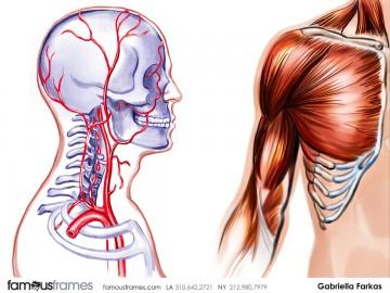 Gabriella Farkas's Pharma / Medical storyboard art
