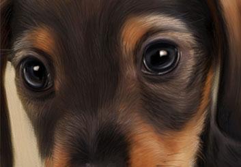 Frank Mignosi's Wildlife / Animals storyboard art
